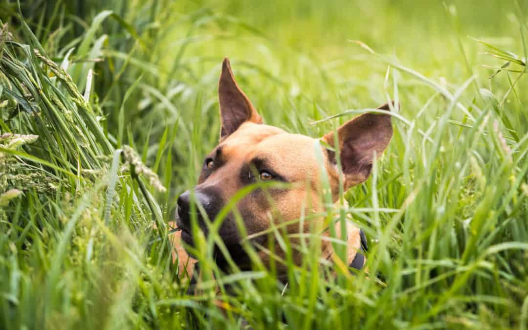 Chip-Pflicht bei Hunden