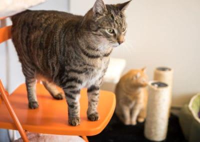 Katzenstreu verstopft Toiletten