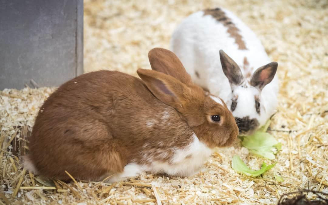 Tipps für die Außenhaltung von Kaninchen