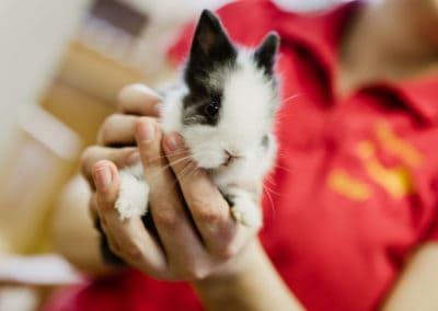 Informationen über die Haltung von Kaninchen
