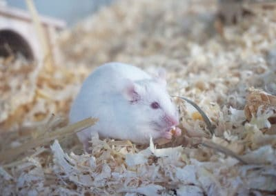 Informationen über die Haltung von Mäusen