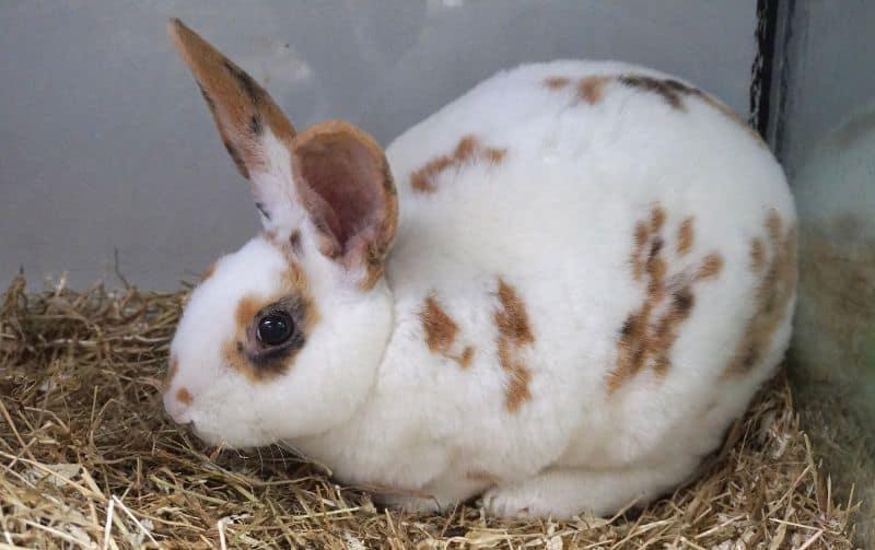 Kaninchen Danny