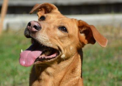 Der verpflichtende Wiener Hundeführschein