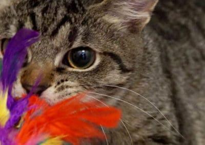 Informationen über den Spieltrieb von Katzen