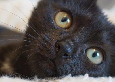 Ratgeber: Katze als Haustier?
