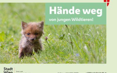 Hände weg von jungen Wildtieren!