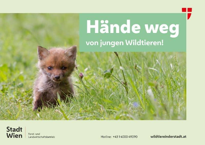 Hände weg von jungen Wildtieren