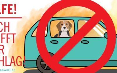 Oft unterschätzt: Hund im Auto = Hitzschlag-Gefahr