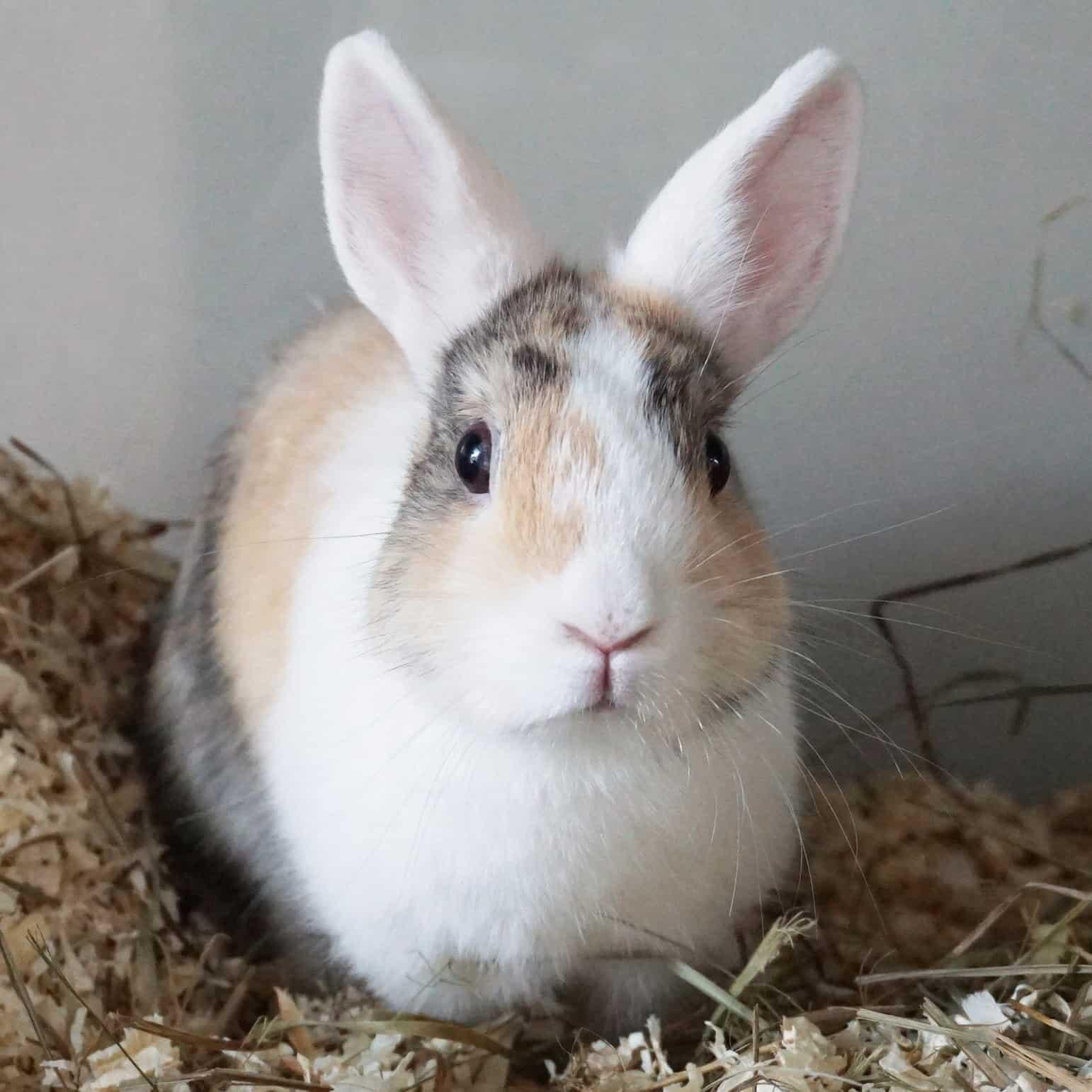 Ein Kaninchen sitzt auf Heu.