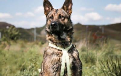 WICHTIG: Tiere chippen und registrieren lassen.