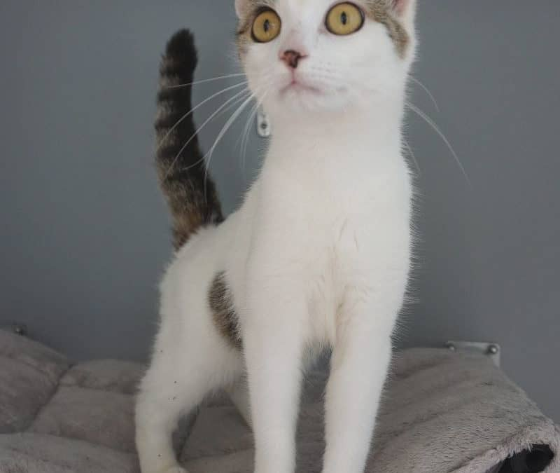 Katzendame freilaufend gefunden