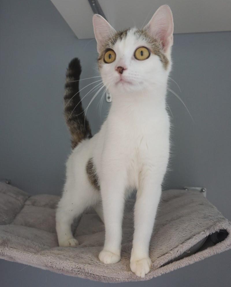 Katzendame Kiri