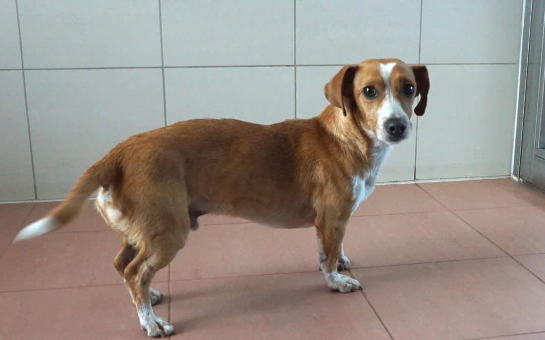 GERETTET: Gequälter Hund aus der U-Bahn im TierQuarTier Wien