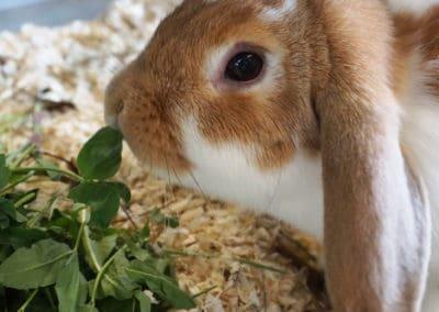 Informationen über die Ernährung von Kaninchen