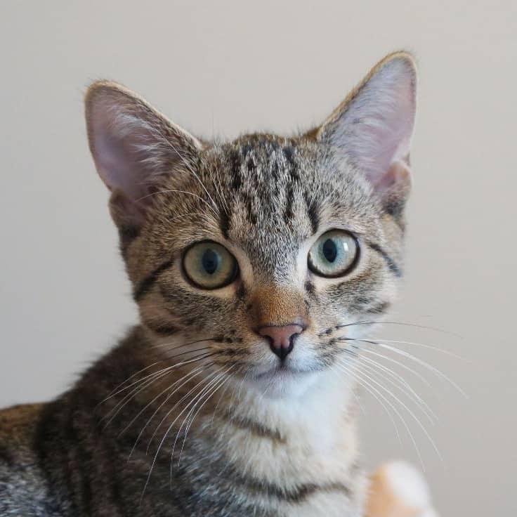Eine Katze schaut in die Kamera.