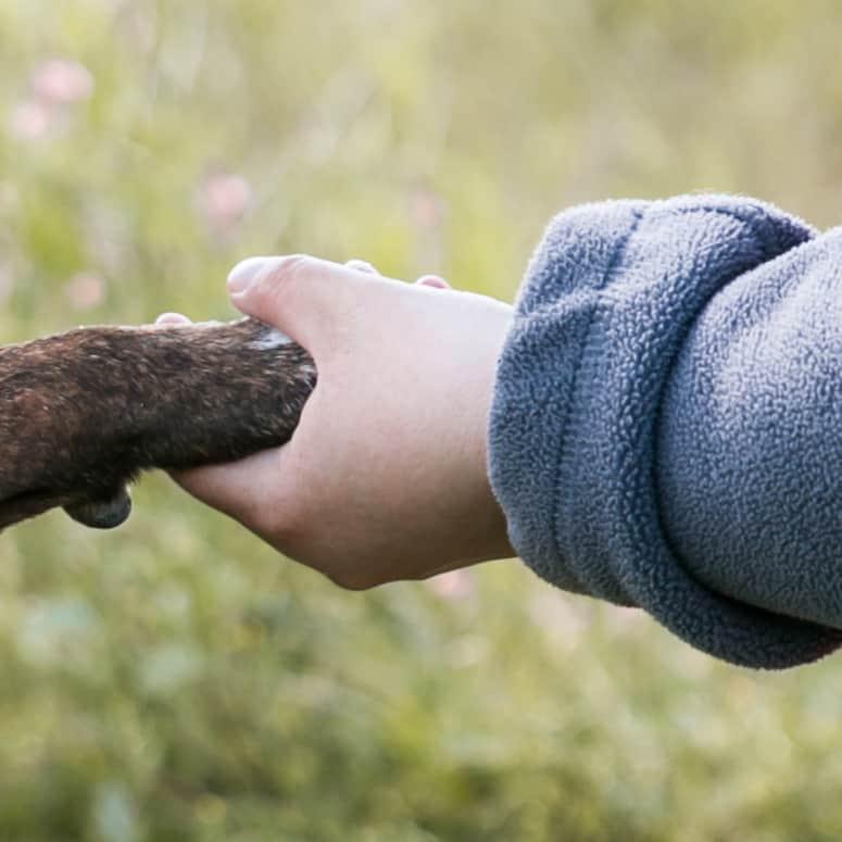 Eine Hand hält eine Hundepfote.