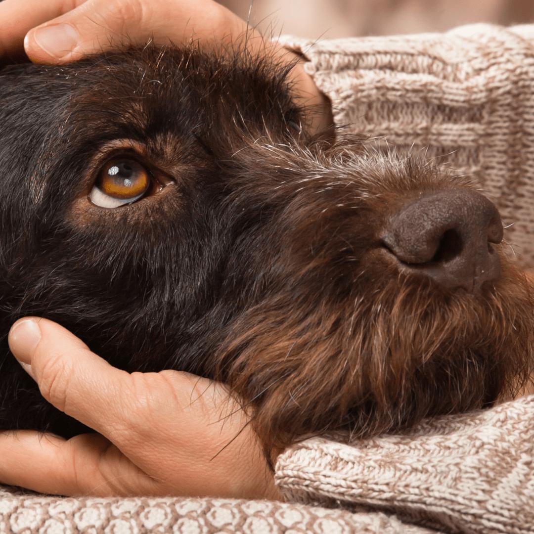 Tierpatenschaft für Hunde