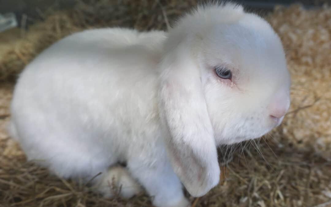 In Eiseskälte zurückgelassen: Drei Kaninchen in Park ausgesetzt