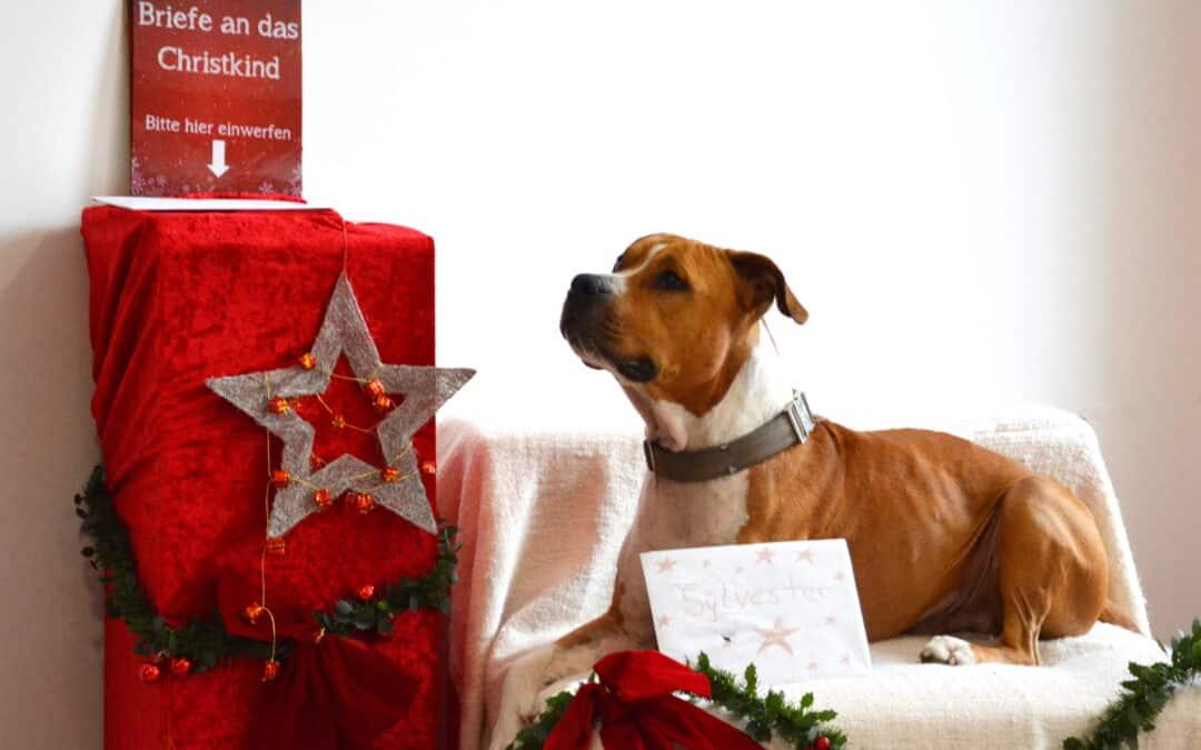 Wir wünschen frohe Weihnachten und ein schönes, neues Jahr!
