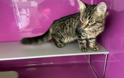 Kitten in zugeklebter Katzentoilette ausgesetzt!