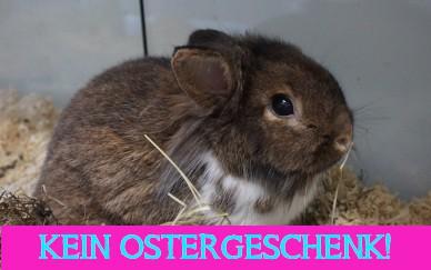 Achtung: Kaninchen sind KEINE Ostergeschenke!