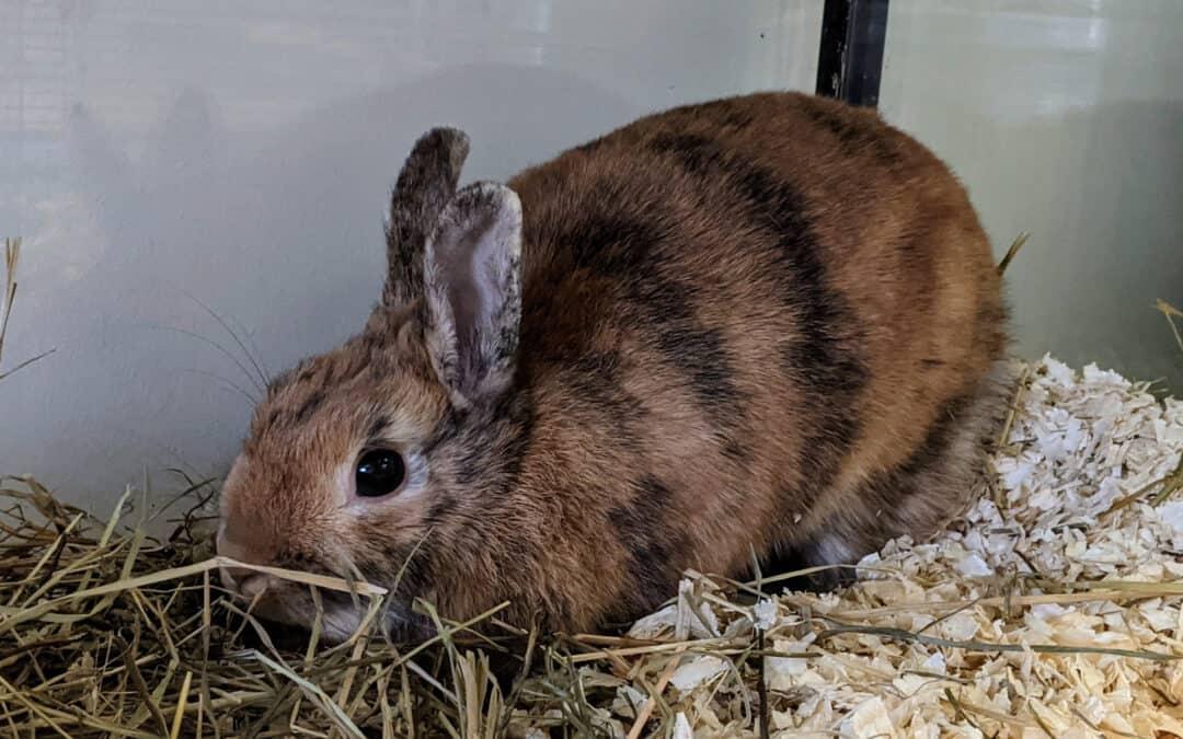 Innerhalb weniger Tage: 6 Kaninchen in Wien ausgesetzt