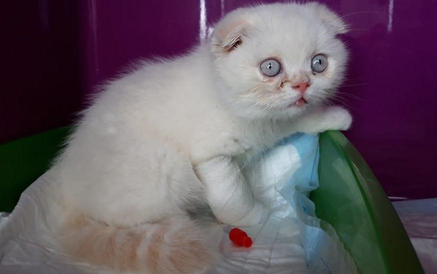 In Tasche ausgesetzt: Krankes Kitten wurde wie Müll abgestellt!