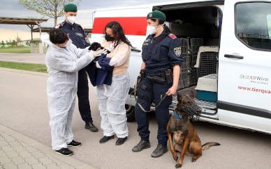 Erneut Illegaler Welpenhandel in Wien aufgedeckt!