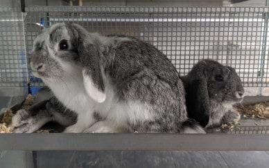 11 ausgesetzte Kaninchen in nur 4 Tagen. Ein trauriger Rekord!