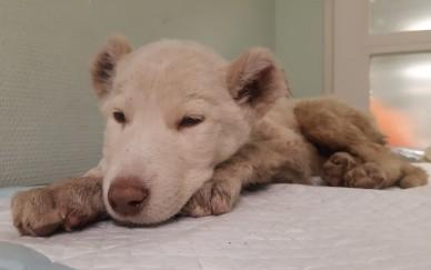 Kranke Tierbabys in Wien: Ungewollt und aussortiert