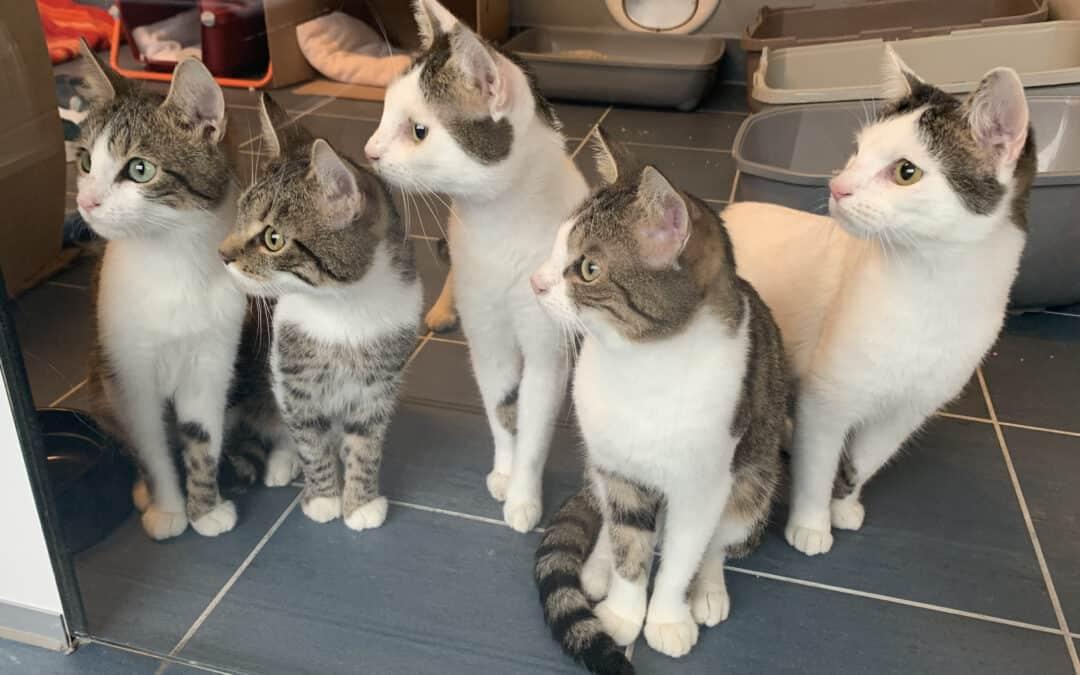 Katastrophaler Fall von Animal Hoarding in Wien