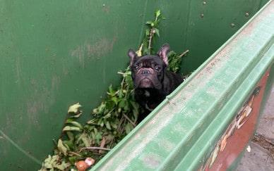 Grausam! Katze und Hund aus Müllcontainer gerettet